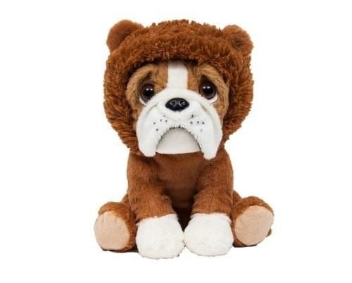 Cachorro Buldog com roupa de Leão - Bulldog Leãozinho - Buba